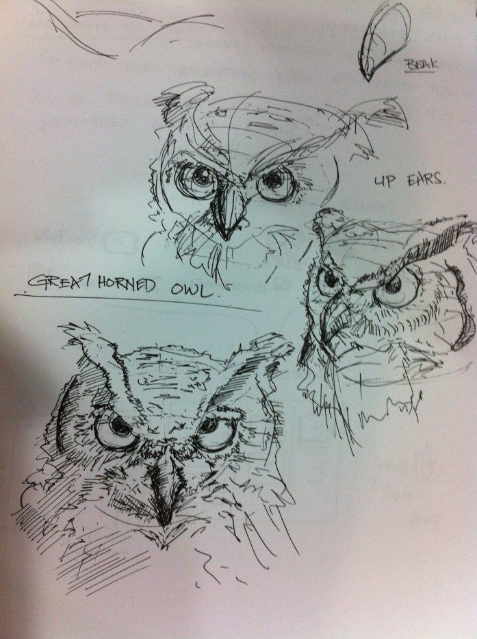 Great Horn Owl Sketch